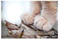Чому кішки топчуть нас лапками